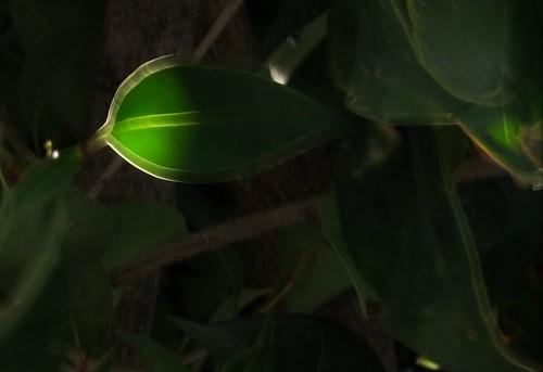 Radriografia de una hoja
