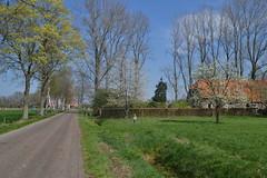 Bomen in het voorjaar (136FJAKA_3413)