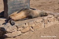 DSC06064  Namibia L4