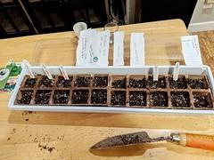 seed tray 1