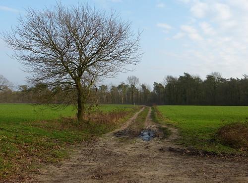 Landscape near Winterswijk