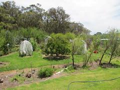 F&V Mandala Late Summer – Red Moon Sanctuary, Redmond, Western Australia