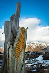 Corn Tree