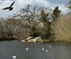 Finsbury Park Lake