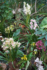 L'exposition Orchidées  (Museum national d'histoire naturelle, Paris)