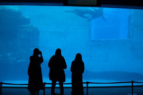 20200117 Nagoya Aquarium 1