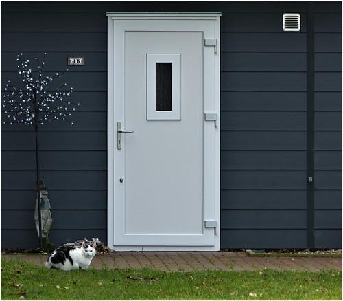 Cat with door