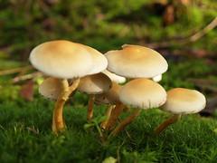Pilze - Fungi - Mushrooms