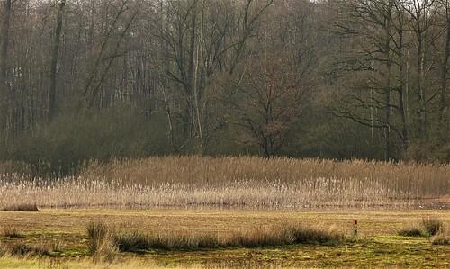 Nature area Korenburgerveen near Winterswijk
