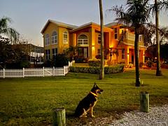 Big House, Medium Dog, Small World - IMRAN™