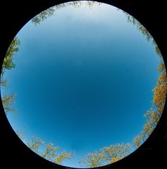 Ring of trees taken lying on my back with fisheye.