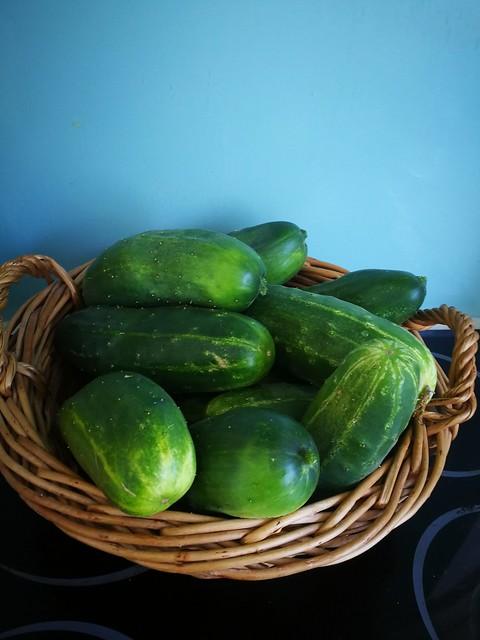 So many cucumbers