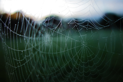 the spiders web - Devon - Oct 2019