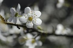 Lumière de printemps