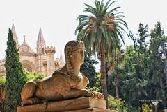 the city of palma de mallorca