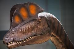 Dilophosaurus