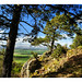 (17) image - Ancient Scots Pines overlooking the valley