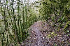 Trail along the Valserine river @ Montanges