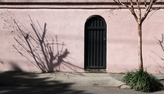 Shadow bush: Charleston, SC