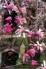 """Cincinnati - Spring Grove Cemetery & Arboretum """"Star Kobus Over Dexter Mausoleum"""" Double Exposure"""