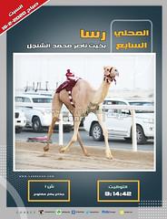 صور أشواط الجذاع العامة بالمحلي السابع (صباح) ١٥-٢-٢٠٢٠