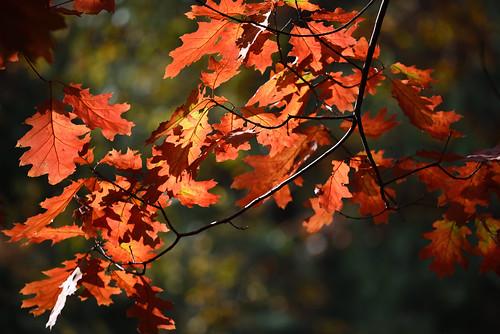Feuilles d'automne_2_
