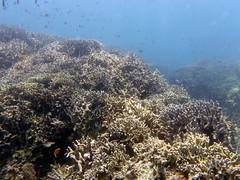 Airplane Wreck and White Beach diving, Moalboal, Cebu