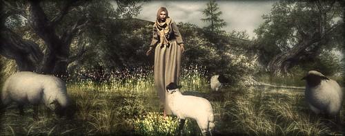 ► ﹌Dessine moi un mouton ...◄