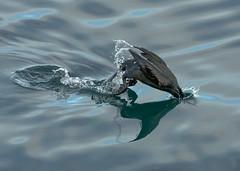 Fast Dive