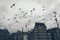 Amsterdam, Netherlands | October 26, 2018