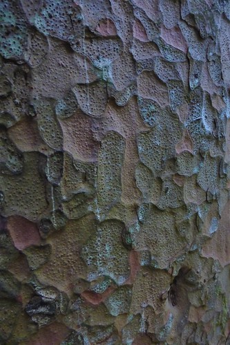 Kauri bark