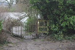 The path from Iron Bridgeroad to the end of our road is water - Storm Dennis in Tongwynlais
