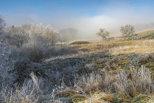 *Winterland*