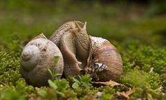 Schnecken - Snails