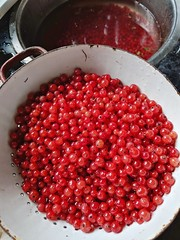 Red currents - Photo of Échalou