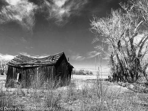 Owens Valley 103