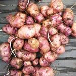 Te Māori taewa potato
