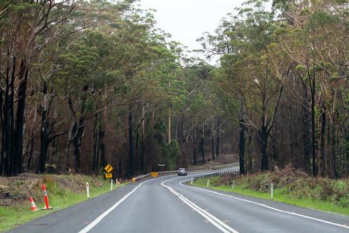 Princes Highway after the bushfires