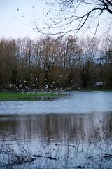 Rickmansworth Aquadrome - 17th February 2020