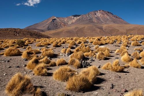 Bolivian Volcanic Grasslands