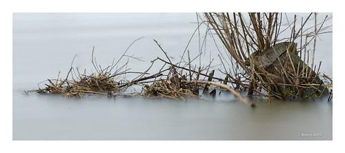 MAAS...30 sec Hochwasser...