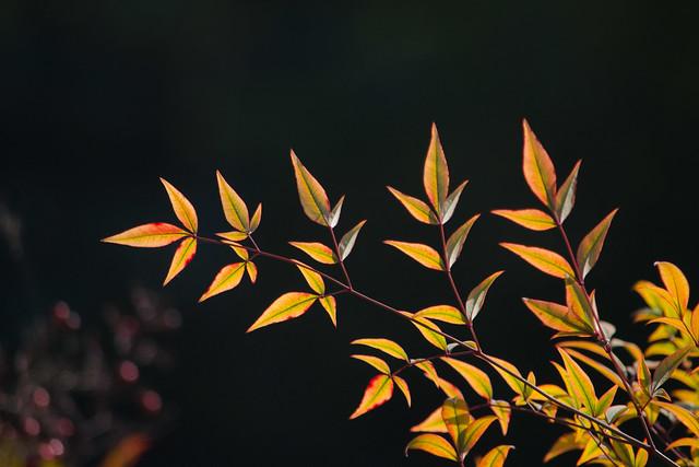 Photo:Spring jewels By ashokboghani