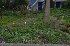Tulpen in Ommen (136FJAKA_3417)