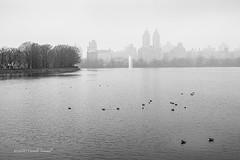 A Misty Skyline