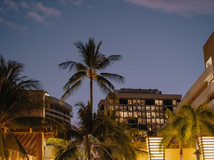 Waikiki Beach Hotels and Palm Trees