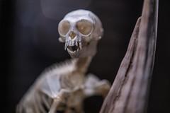 Lemur reaper