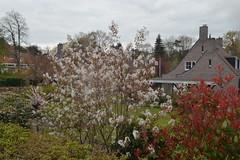 Bloem voor Reggehof in Ommen (136FJAKA_3427)