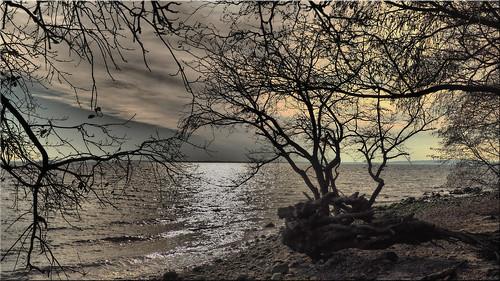 Winter in February 2020 on the Baltic Sea coast