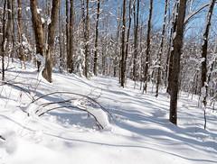 Mondeaux Esker Segment Ice Age Trail