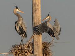 Nesting has begun